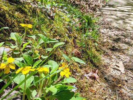 Spring Has Sprung: Carolina Wildflowers