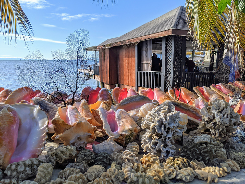 Conch shells and brain coral are abundant in Roatan. Photo by Rene Griffith.