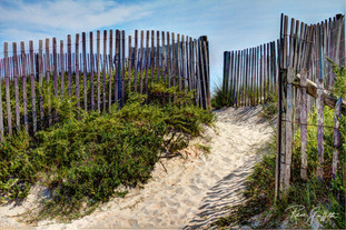 Fenced Beach Path