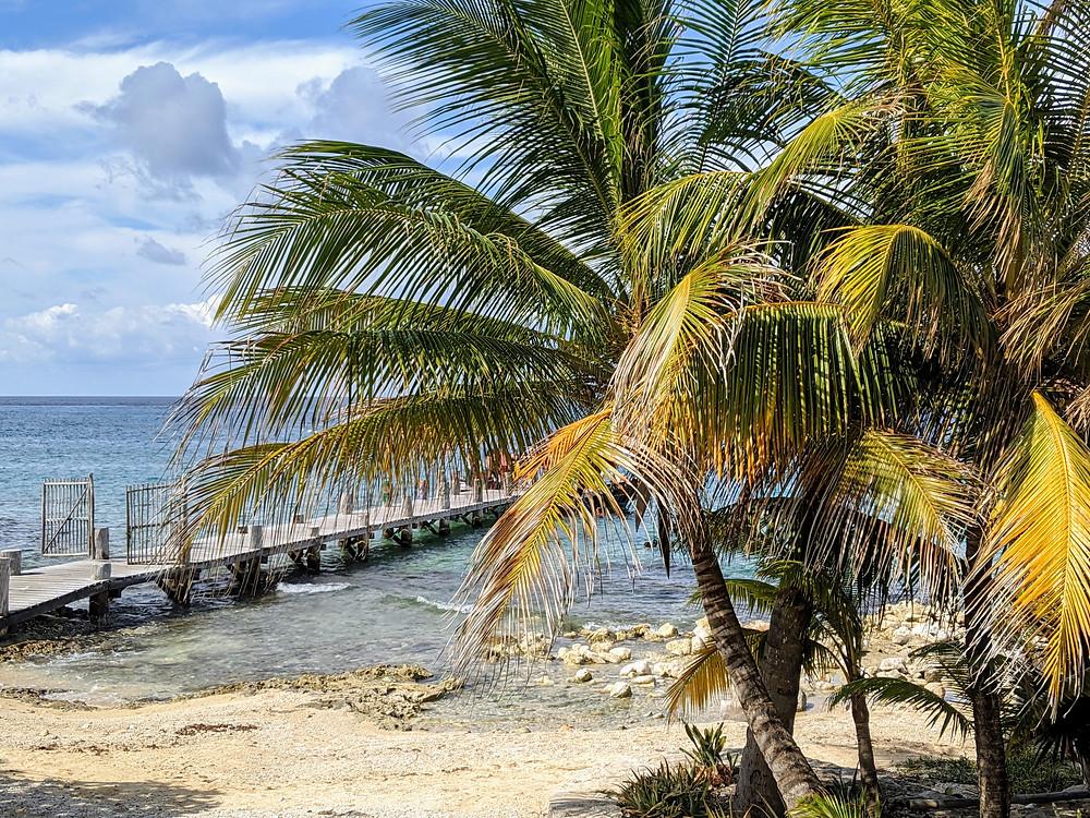 Beautiful wind blown palms in Roatan. Photo by Rene Griffith.