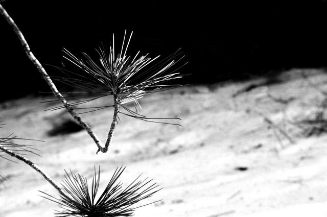 Reaching - Nature Series