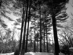 Thoreau-Richard Higgins_5.7