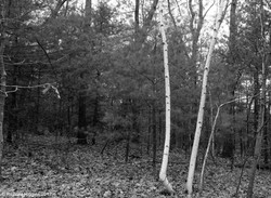 Thoreau-Richard Higgins_4.2_alt