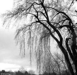 Thoreau-Richard Higgins__3.14