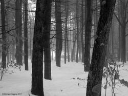 Thoreau-Richard Higgins_2.8_alt