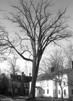 Thoreau-Richard Higgins_7.4