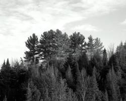 Thoreau-Richard Higgins__6.9
