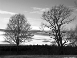 Thoreau-Richard Higgins_1.1