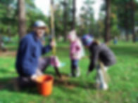 Pines 2.jpg
