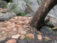 bushrangers4.jpg