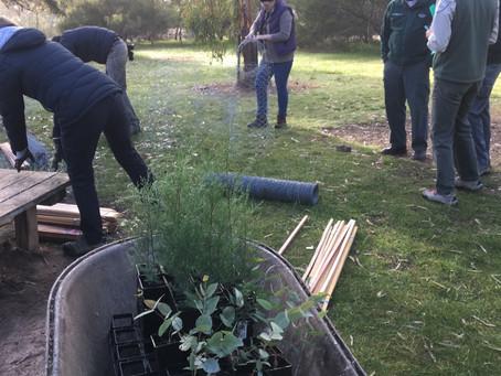 Mt Arapiles Campground Repair Project – Pines Revegetation June 11th, 2017