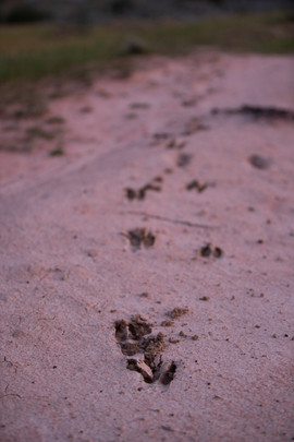 Footprints, The Grampians