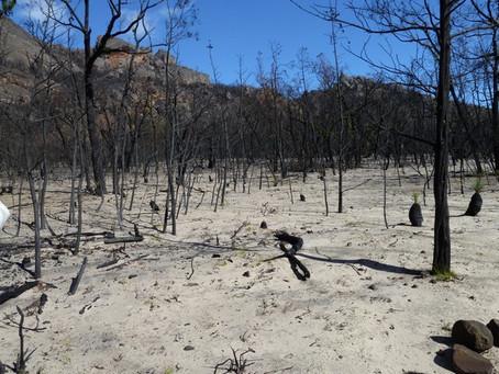 Victoria Range Fire Update