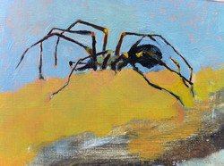 Spider on yellow rock