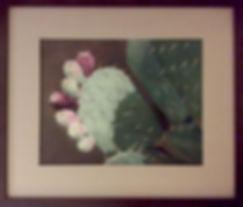 Pear Cactus-Melinda.jpg