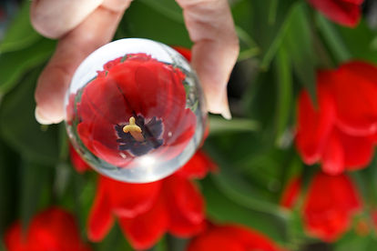 Red Tulip $65.jpg