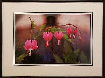 Bleeding Hearts-Posey Clements-Photograp