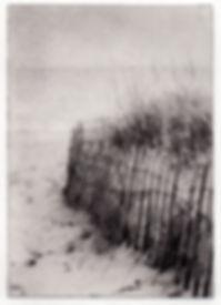 Beach Grass-CDunn.jpg