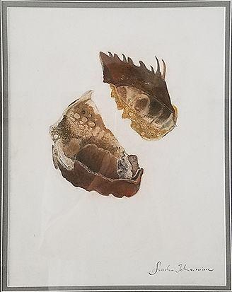The World Within II-Sandra Jeknavorian-Pastel on Paper-$475.jpg