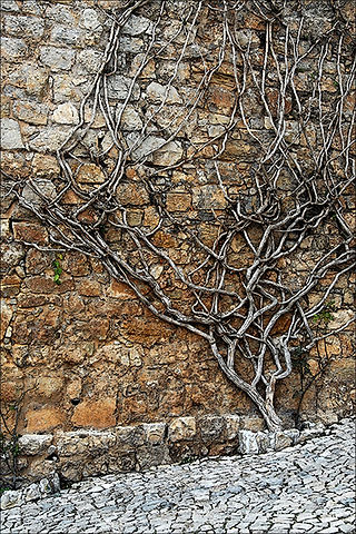 Obidos, Portugal-Altered Photo 8x12-$175