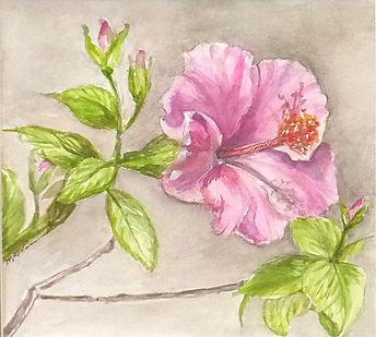 GabeLipman Hibiscus.jpeg