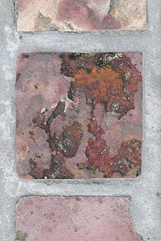Australian Pinks-4-Unalt Photo 8x12-$175