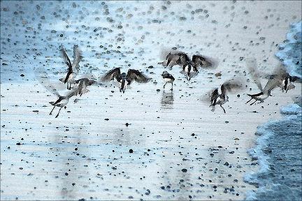 Sandpiper Scurry-Altered Photo 12x8-$175