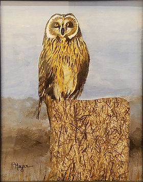 Short Eared Owl-Phyllis Meyer-Paper & Ac