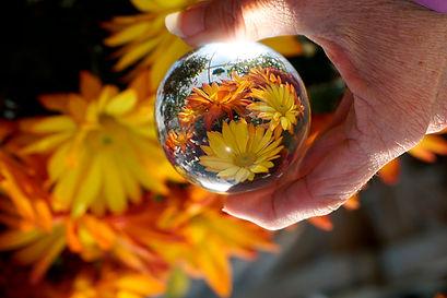 Chrysanthemum $85.jpg