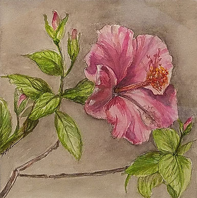 Hibiscus-Gabe Lipman-Watercolor-$130.jpg