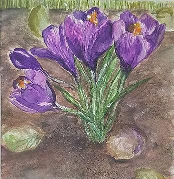 Crocus-Gabe Lipman-Watercolor-$130.jpg