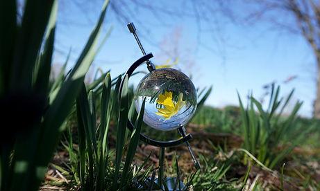 Daffodils3 Triptych.jpg