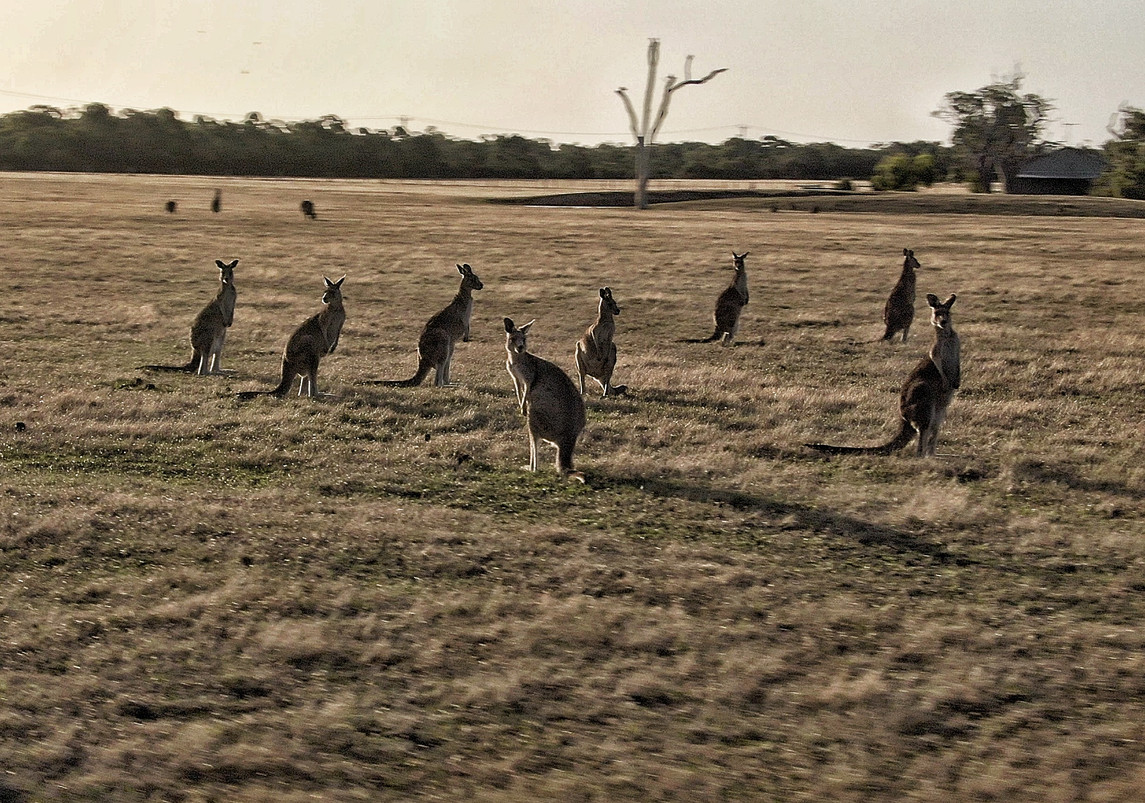 Happy family reunion - Australia