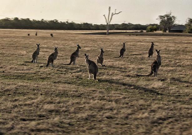 Happy family reunion - Australia