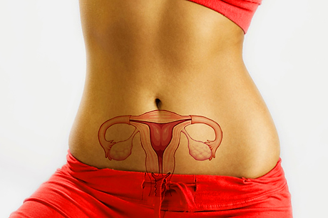 female reproductive.png