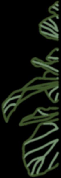Ficus Plant.png