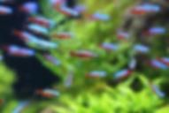 Ingleby Pet Supplies Fish and Aquatic Supplies Shop Online UK