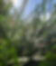 Screen Shot 2020-04-28 at 9.41.24 AM.png