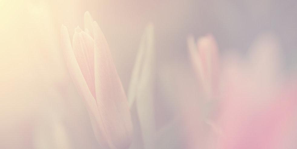 Flower in Sunlight_edited.jpg