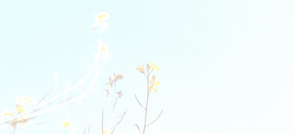 Spring Branches_edited.jpg