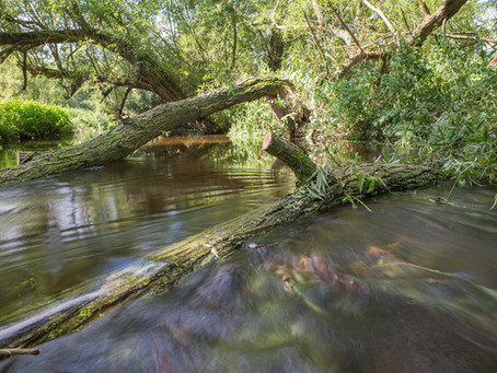 Why put wood in rivers?