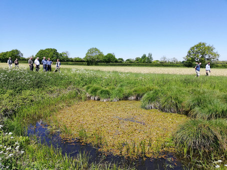 The Importance of Rural Pond Habitats