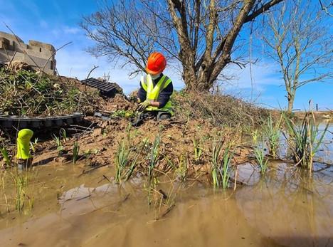 pond restoration.jpg