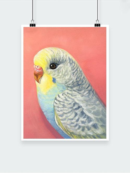 Sweetie Bird