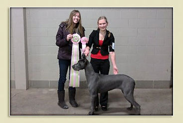 AKC junior show