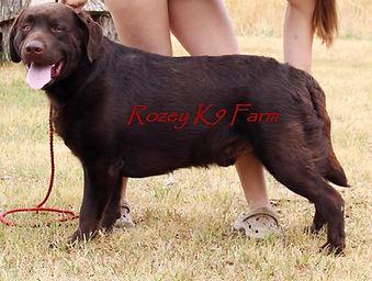 Rozey K9 Farm review