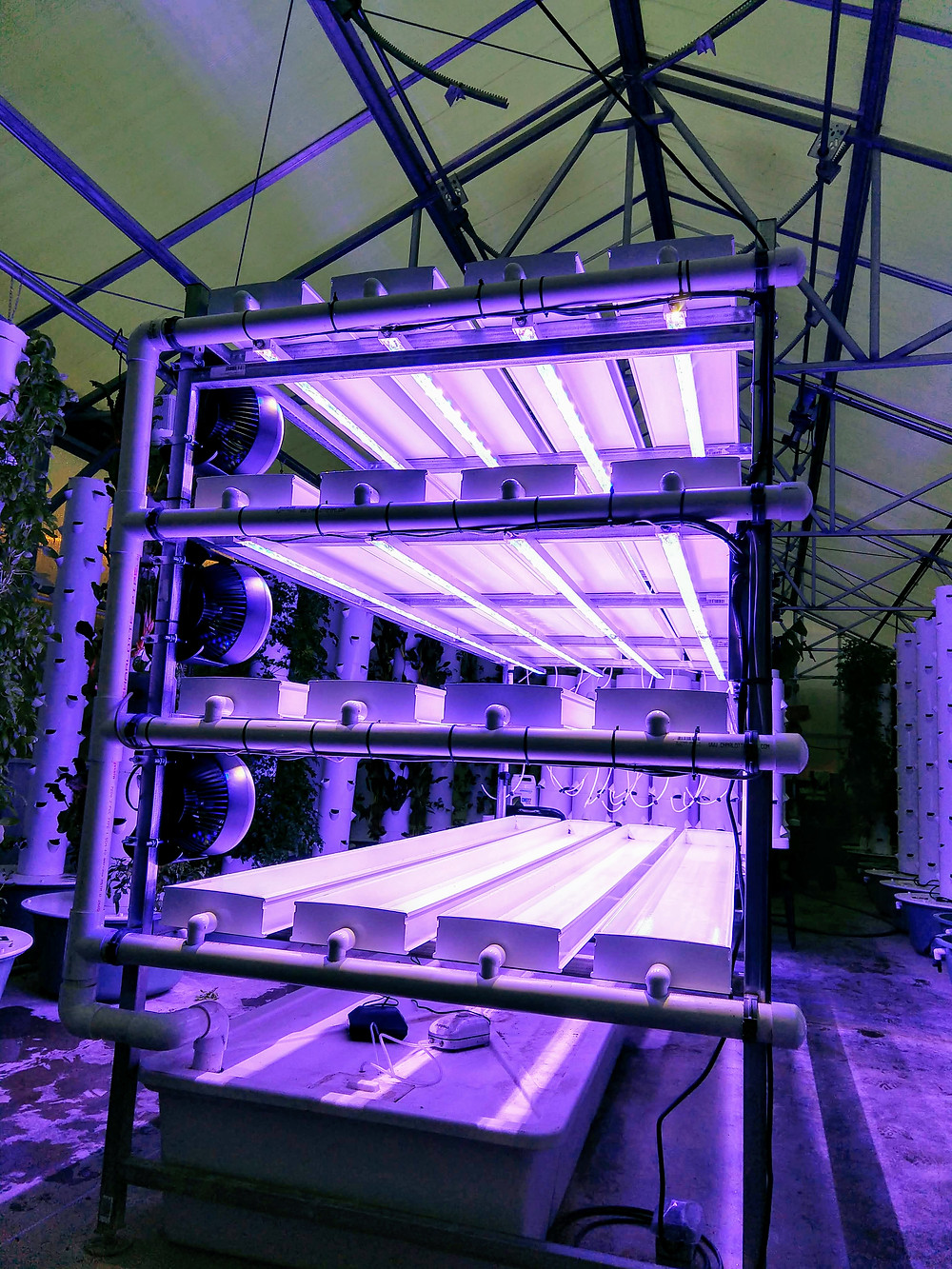 Nutrient film hydroponic shelf unit with freshly installed blue LED grow lights.