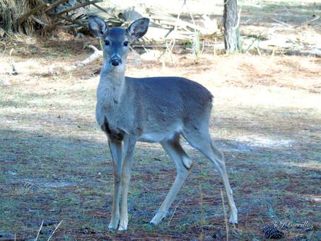 WEEK TWENTY-FOUR - Oh, Deer