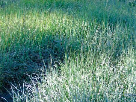 WEEK FIFTEEN - Grass