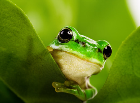 Do Frogs Know the Cure for Loneliness?